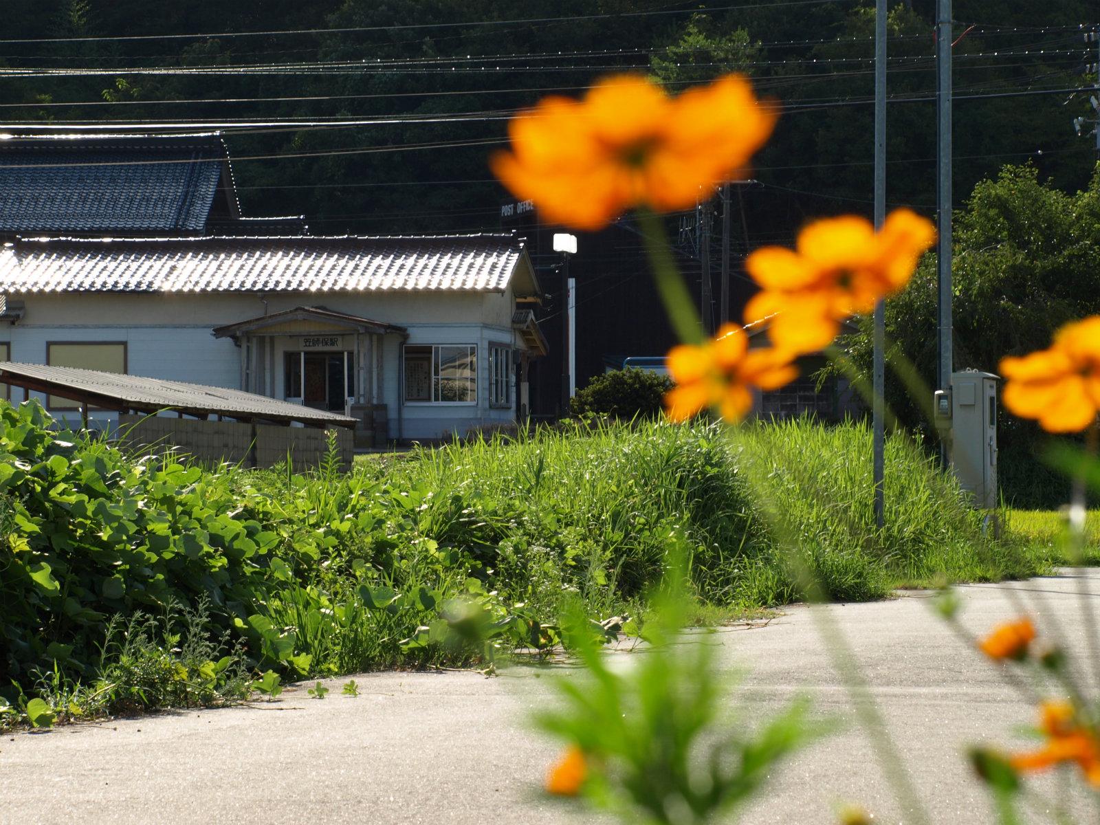時期は8月半ば。もうコスモスが咲き始めていました。