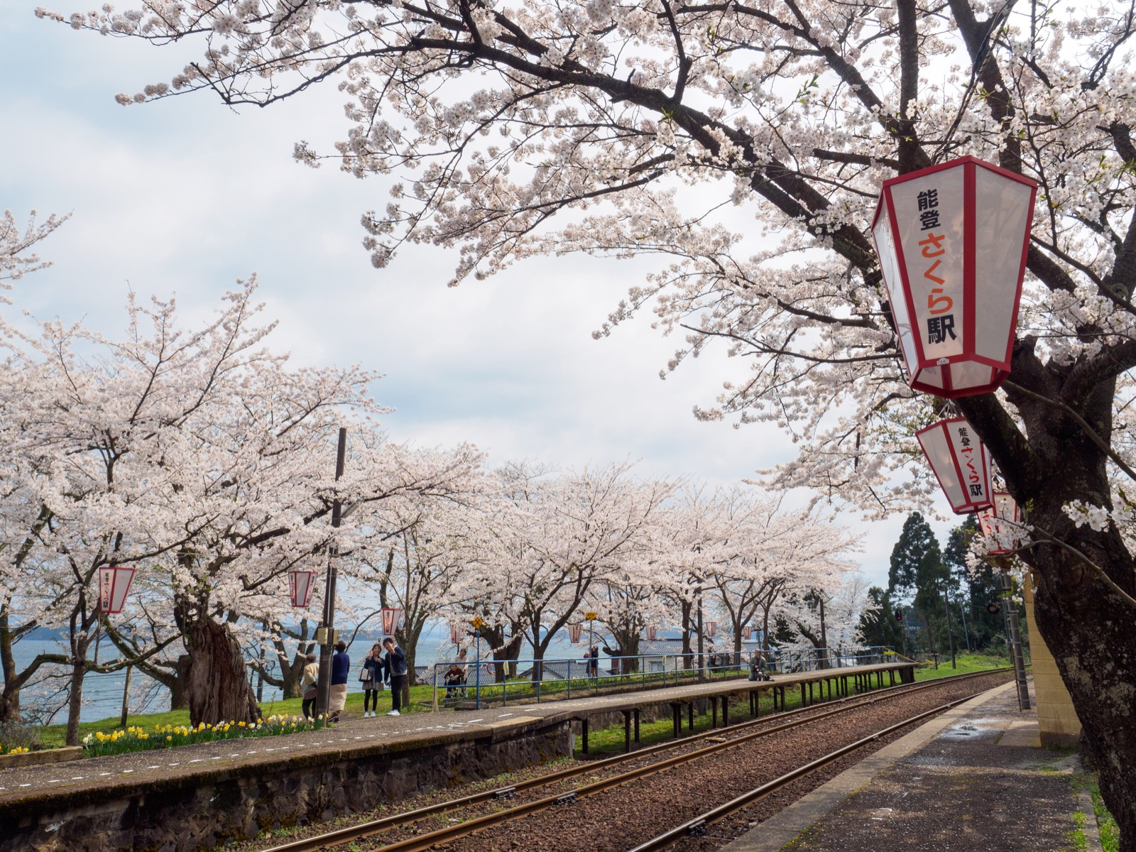 満開の桜が出迎える、能登鹿島駅(能登さくら駅)のホーム