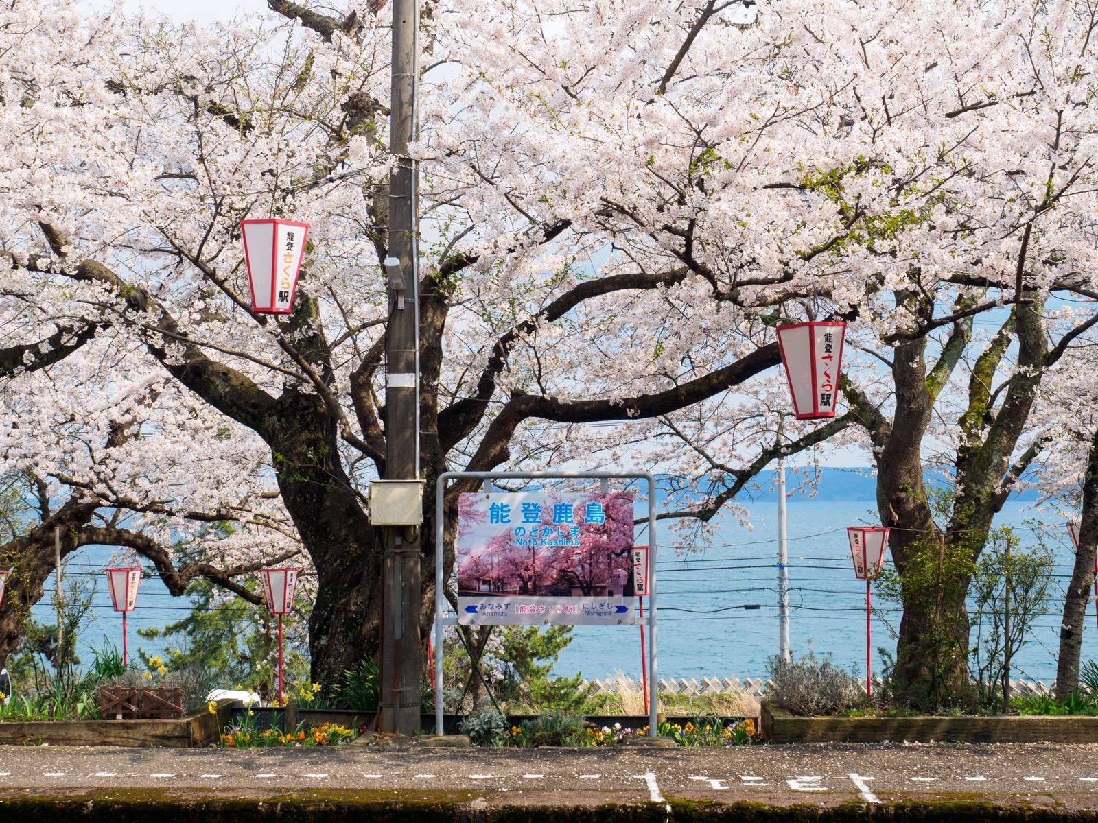桜が咲き誇る能登鹿島駅(能登さくら駅)のホームと、七尾湾