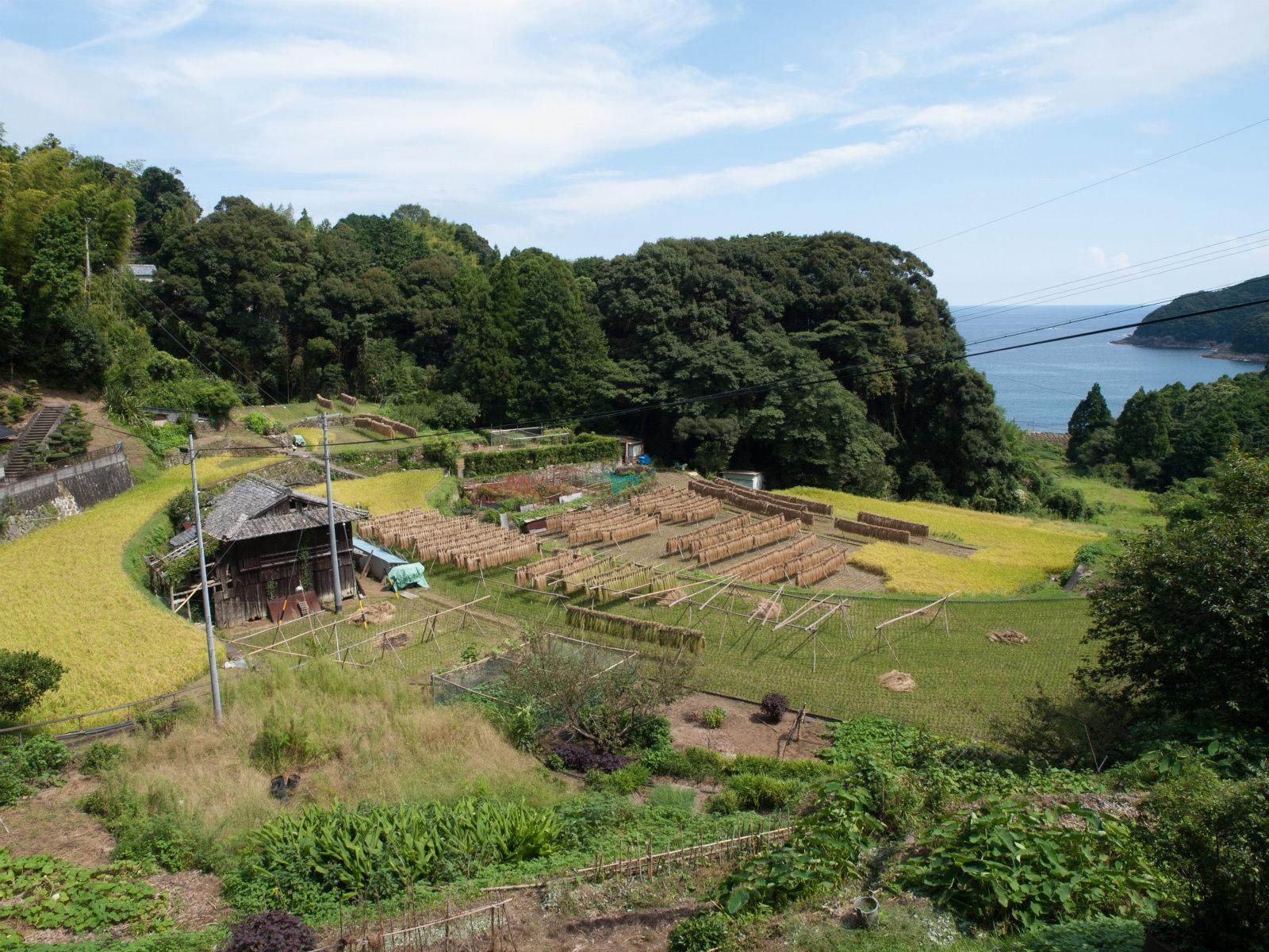 波田須駅周辺