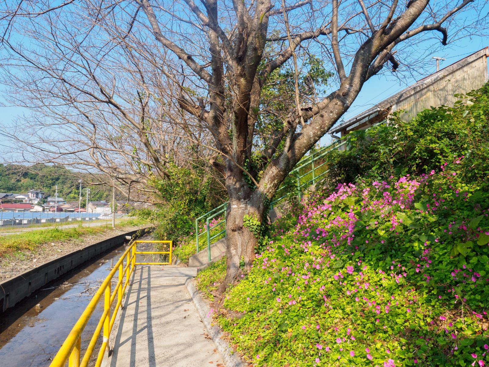 肥前飯田駅の山側の入口