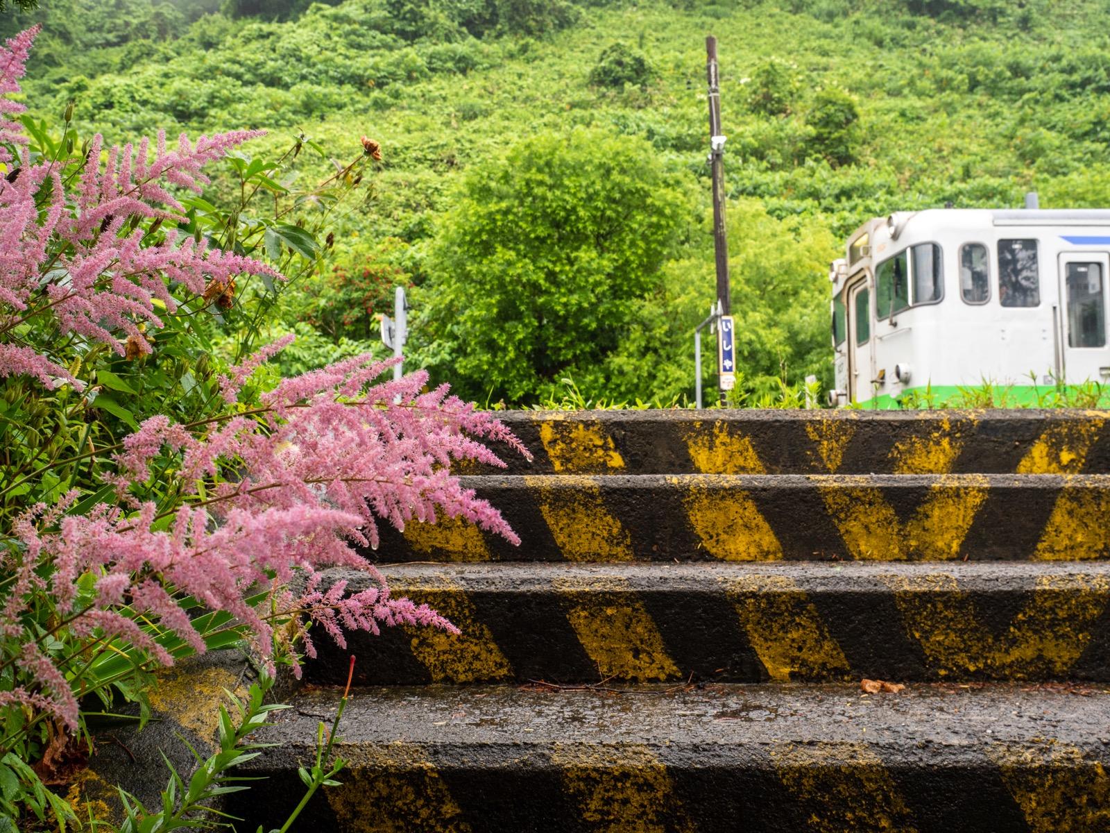 石谷駅に咲く花(2016年7月)