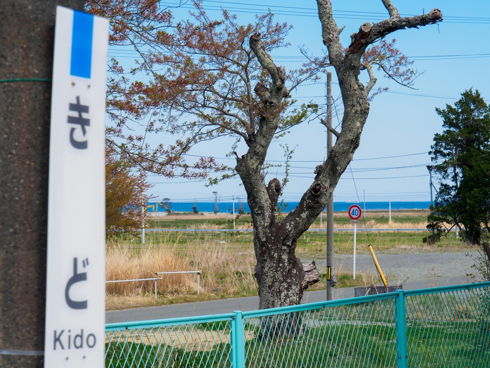 木戸駅のホームから見える太平洋と桜の木(2017年4月)