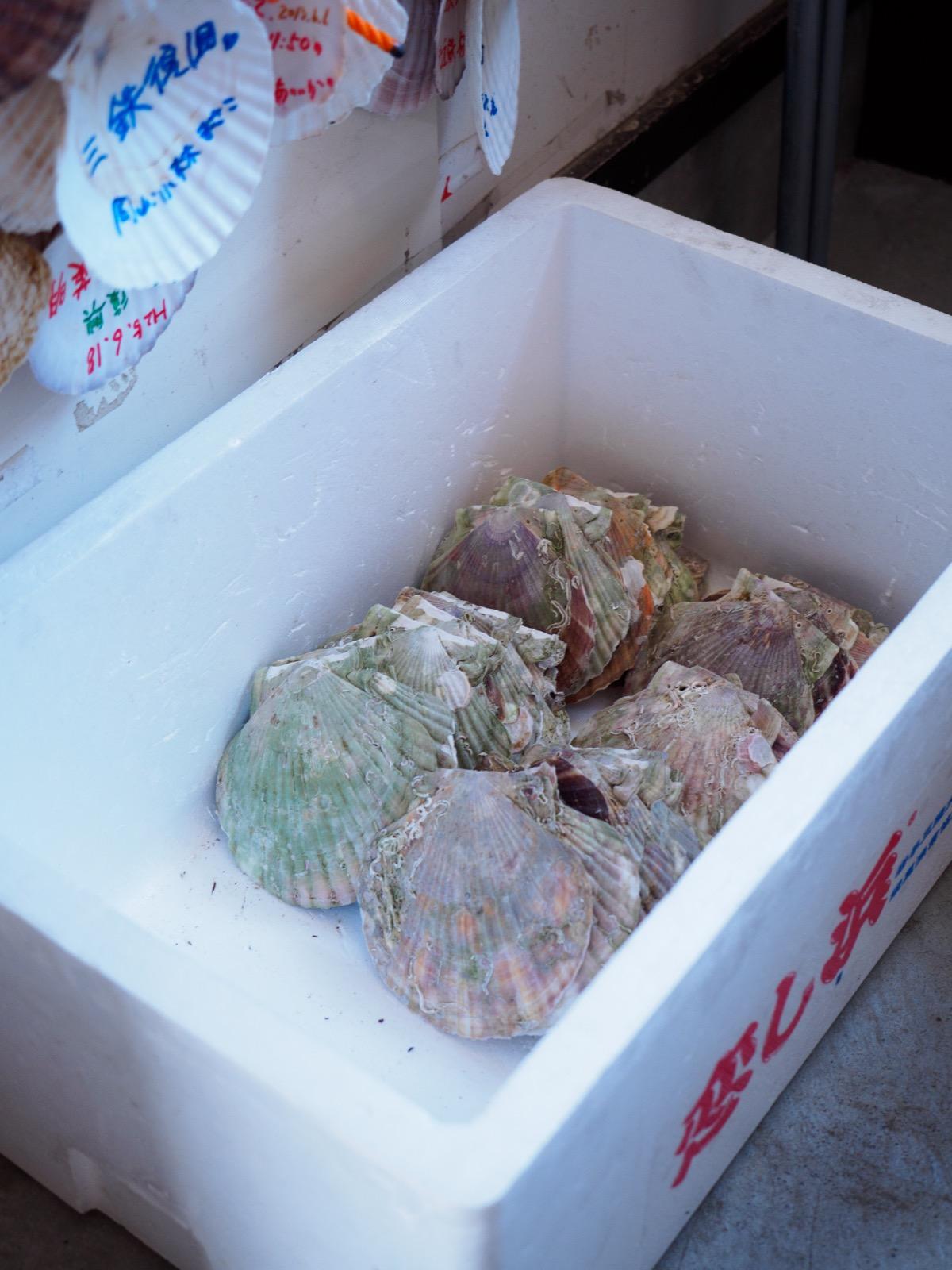 恋し浜駅の待合室に置かれたホタテの貝殻(2016年2月)