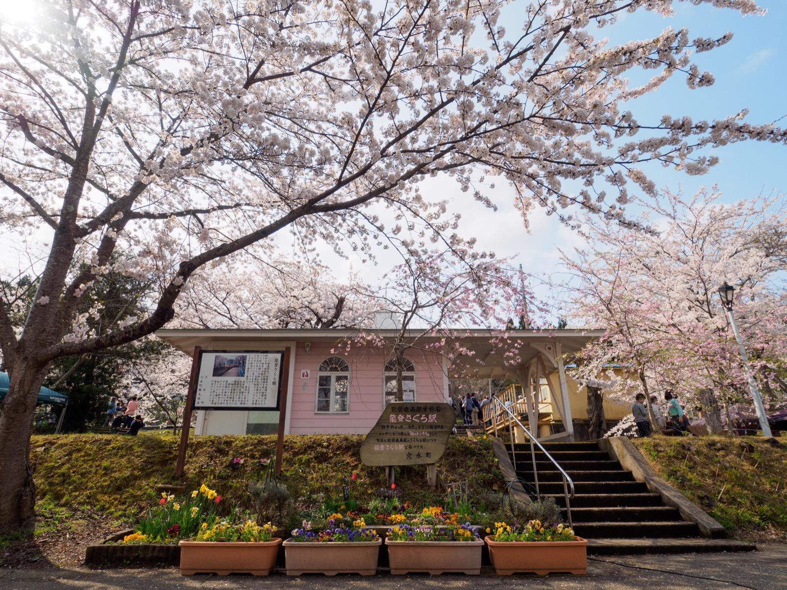 満開の桜に囲まれた、能登鹿島駅(能登さくら駅)の駅舎
