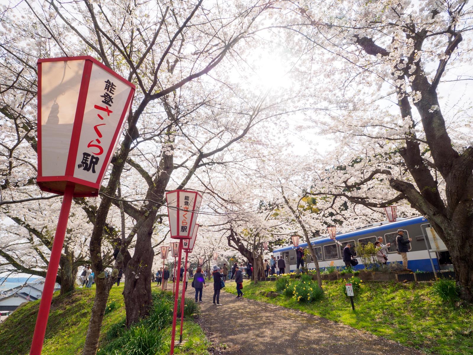 能登鹿島駅(能登さくら駅)の桜並木
