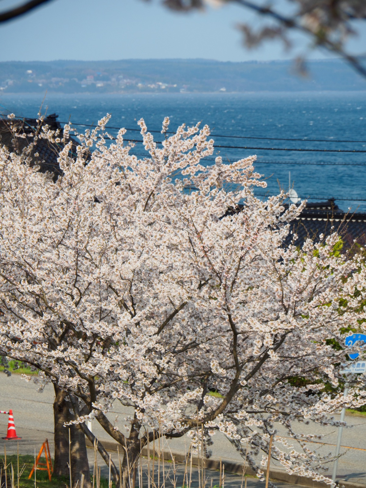能登鹿島駅(能登さくら駅)から見る桜と七尾湾