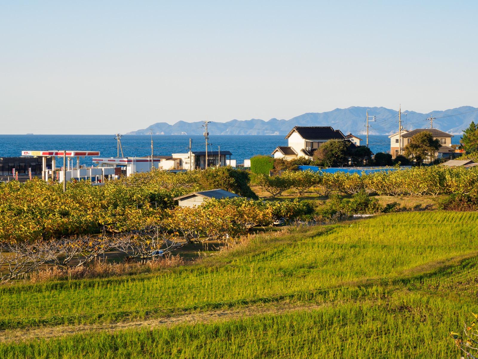 小田駅前のいちじく畑と日本海