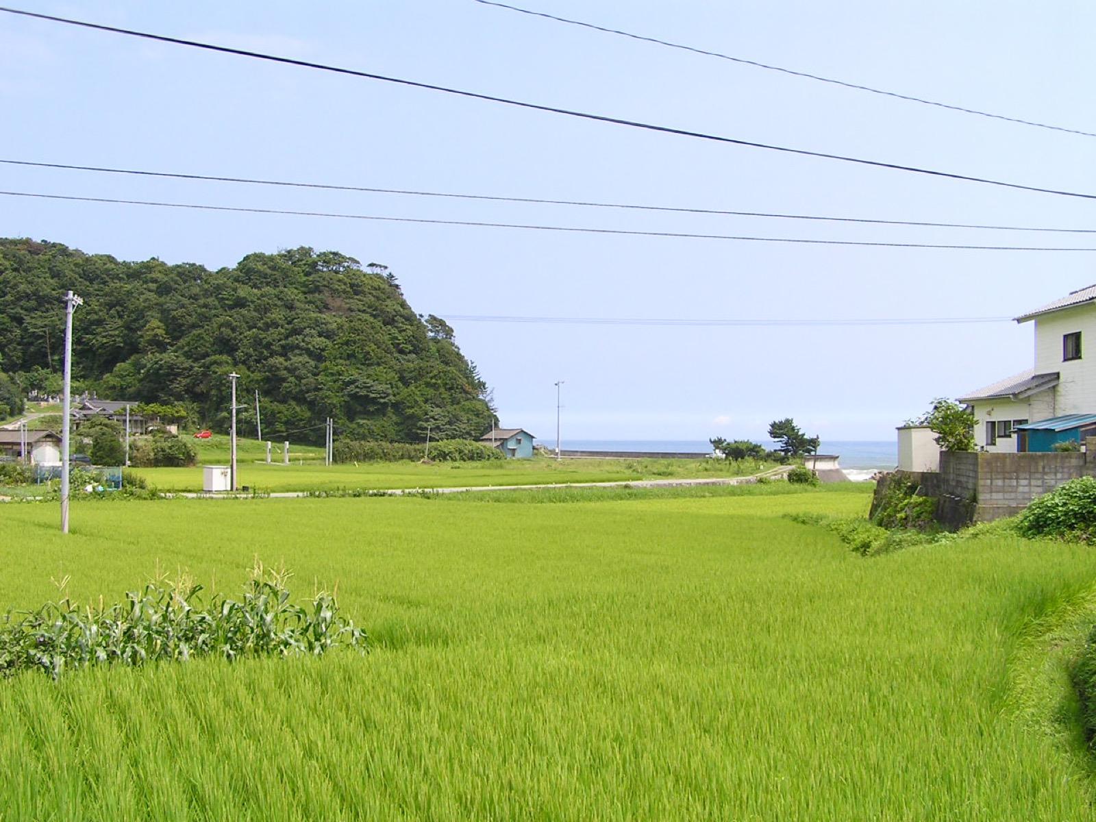末続川沿いの田んぼと太平洋