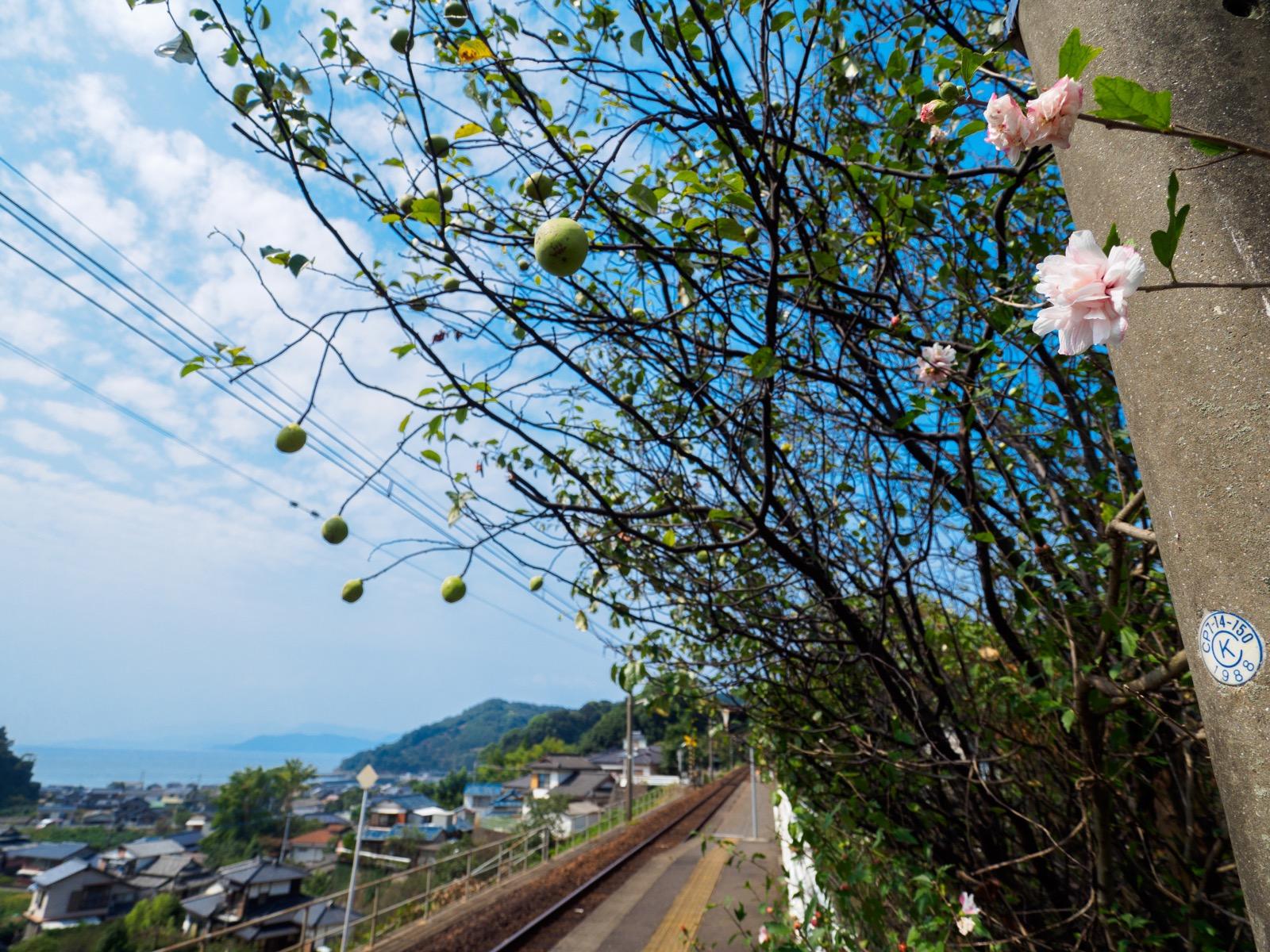 海浦駅のホームで見た木の実と花