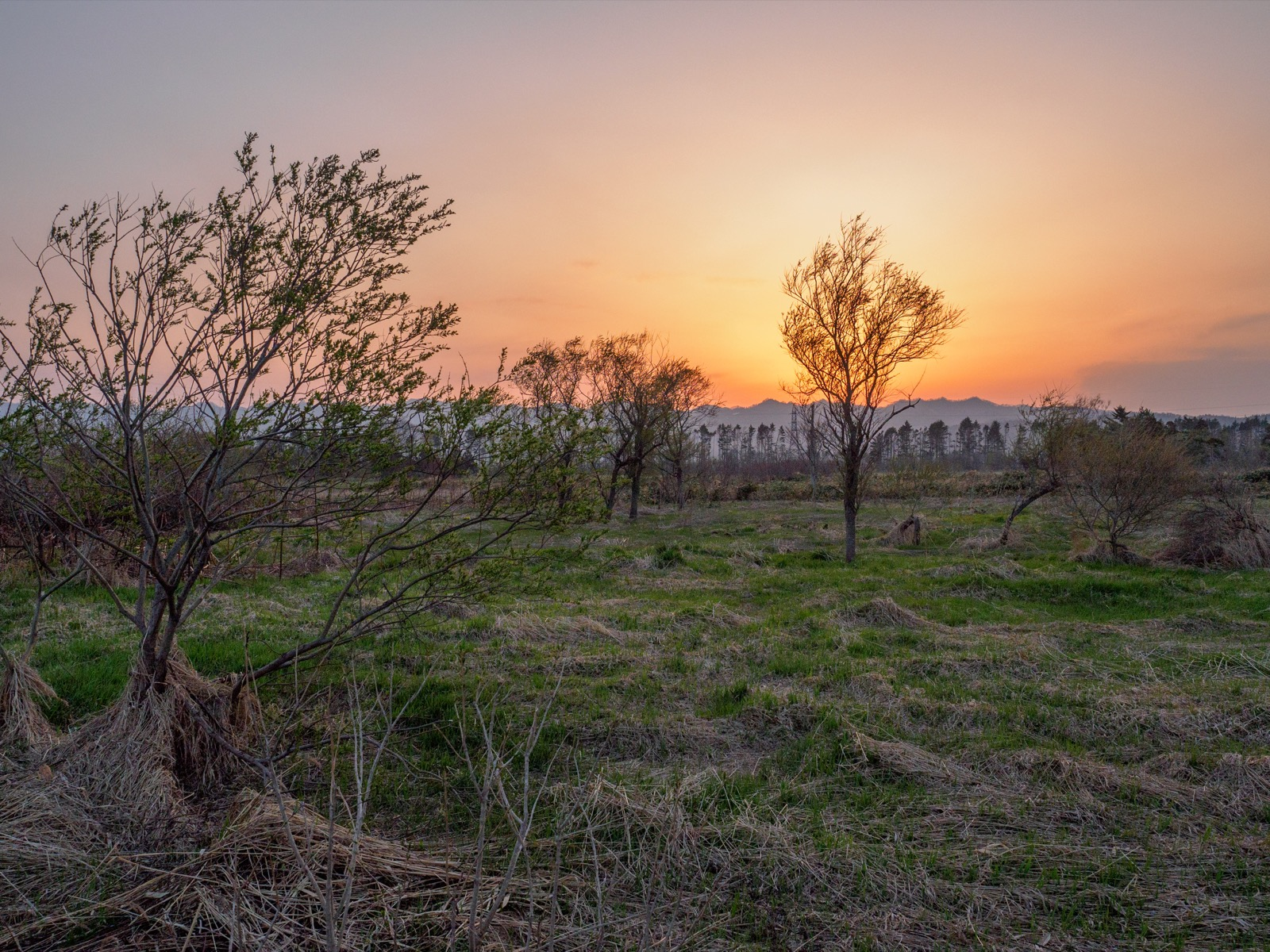 山崎駅前の国道5号線から見た夕暮れの平原